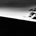 Tree Tilight Long by Blake Richards