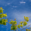 Tree To Sky II by Tammy Bryant