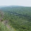 Tree Top Valley by Wesley Farnsworth