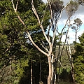 Tree Tops And Beyond by Karen Moren