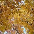 Tree Tops by Luciana Seymour