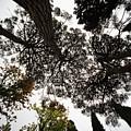 Tree Tops  by Vladi Alon