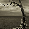 Tree Trunk-1-st Lucia by Chester Williams