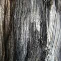 Tree Trunk Abstract Detail by Nareeta Martin
