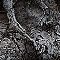 Tree Trunk Abstract by Teresa Wilson