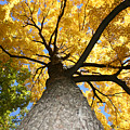 Tree Trunk by Deborah Molitoris
