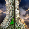 Tree Trunk Portal - 3d Stereo X-view by Brian Wallace