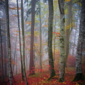 Tree Trunks In Fog by Elena Elisseeva