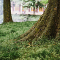 Tree Trunks In Spring by Pati Photography