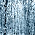 Tree Trunks Pattern by Svetlana Sewell