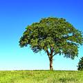Tree Two One... by Nina Stavlund