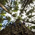 Tree Walkers by Pelo Blanco Photo
