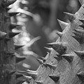 Tree With Spikes And Thorns by Rob Hans