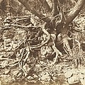 Tree With Tangle Of Roots by Hugh Owen