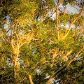 Tree With V Shaped Branches by Debra Lynch