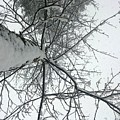 Tree Wrapped In Snow by Smita Shitole