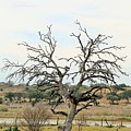 Tree009 by Jeff Downs