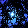 Treed Moon by Bonnie See