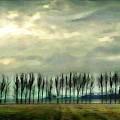 Treeline by Ellen Cannon