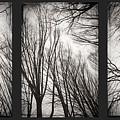 Treeology by Dorit Fuhg