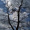 Trees 1 by Helene  Champaloux-Saraswati