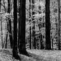 Trees #2 by John Stuart