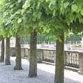 Trees All In A Row by Deborah Selib-Haig DMacq