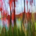 Trees And Lake by Elena Elisseeva