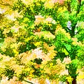Trees And Leaves 1 by Jeelan Clark