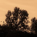Trees And Geese In Sepia Tone by Debra Lynch