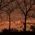 Trees And Sunrise by Charles Owens