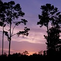 Trees And Sunset by Jeanne Kay Juhos