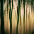 Trees At Dawn by David Lichtneker