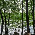 Trees At Lake Schlachtensee by Jannis Werner
