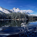 Trees At The Lakeside, Yellowstone by Panoramic Images