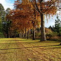 Trees At The Park by Nareeta Martin