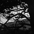 Trees Black And White - San Salvador by Totto Ponce
