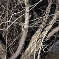 Trees Closeup by Lorraine Coughlin