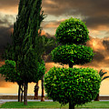Trees In A Park Of Limassol City Sea Front In Cyprus by Oleksiy Maksymenko
