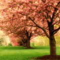 Trees In A Row by Angie Tirado