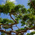 Trees In Bermuda by Nicole Freedman