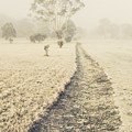 Trees In Fog And Mist by Jorgo Photography - Wall Art Gallery