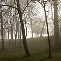 Trees In Fog by Carol Sweetwood