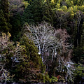 Trees In Japan 2 by George Cabig