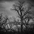 Trees In Storm In Black And White by Brenda Landdeck