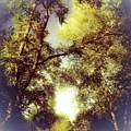 Trees In Summer by Debra Lynch