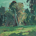 Trees In Sunlight by Mike Kirschel