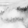 Trees In The Clouds  by Lyle Crump