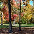 Tree's In The Forest 2 by John Scatcherd