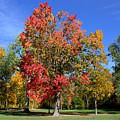 Tree's In The Forest 4 by John Scatcherd